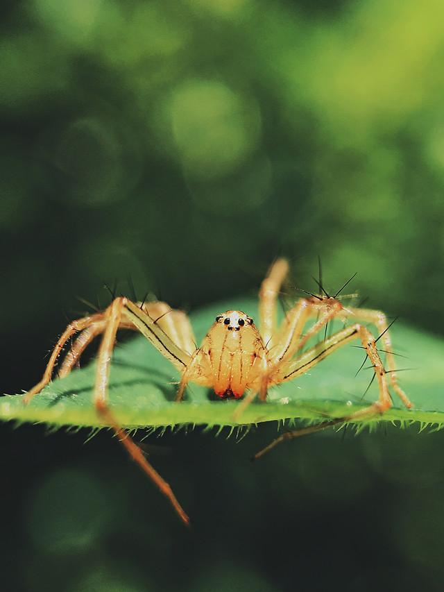 insect-spider-invertebrate-nature-no-person picture material
