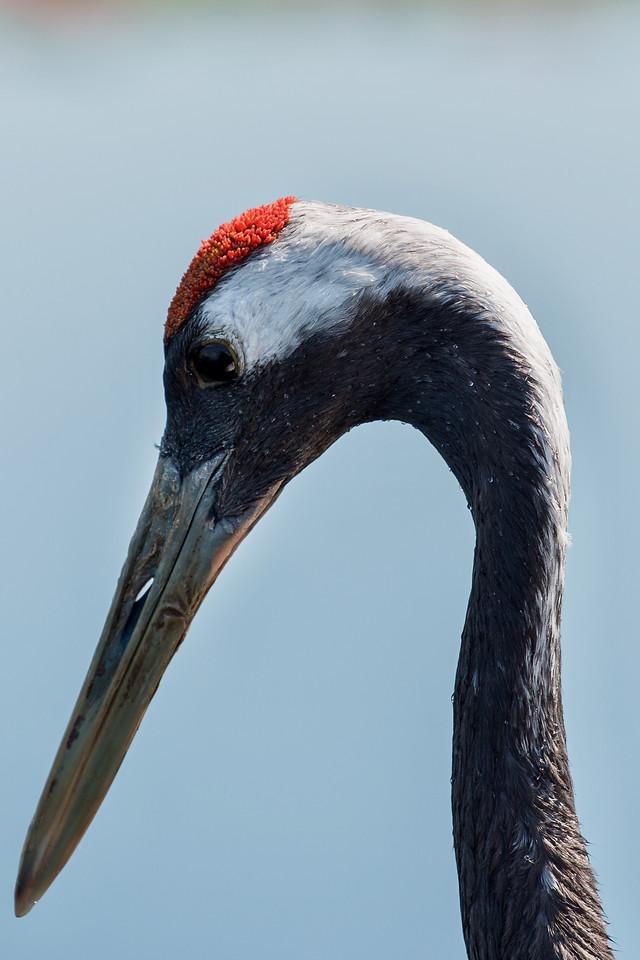 bird-wildlife-no-person-beak-nature picture material
