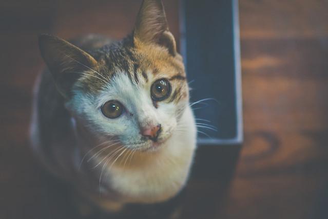 cat-cute-portrait-mammal-pet 图片素材