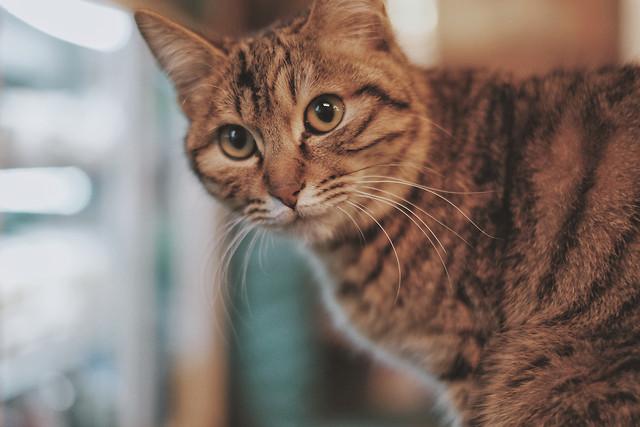cat-portrait-cute-pet-eye 图片素材