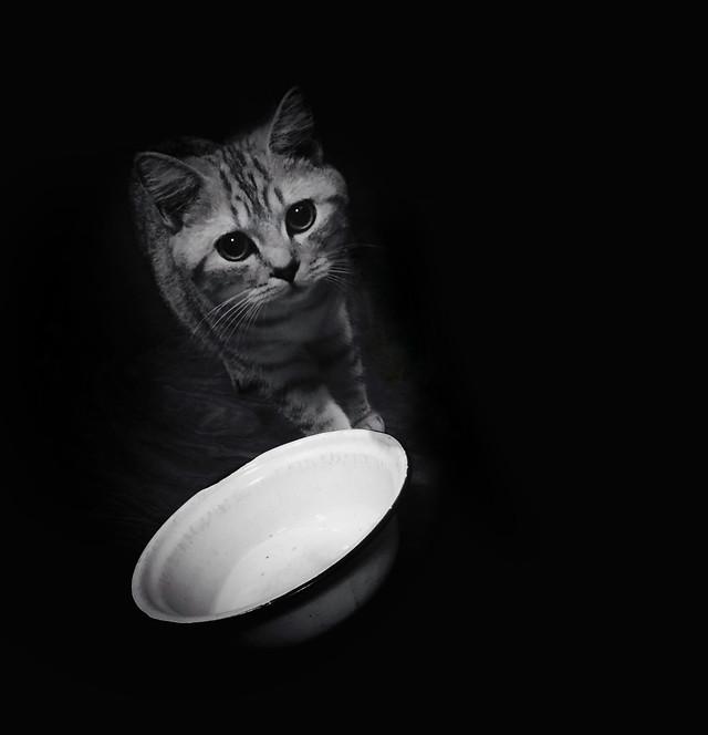 cat-portrait-studio-black-black-and-white picture material