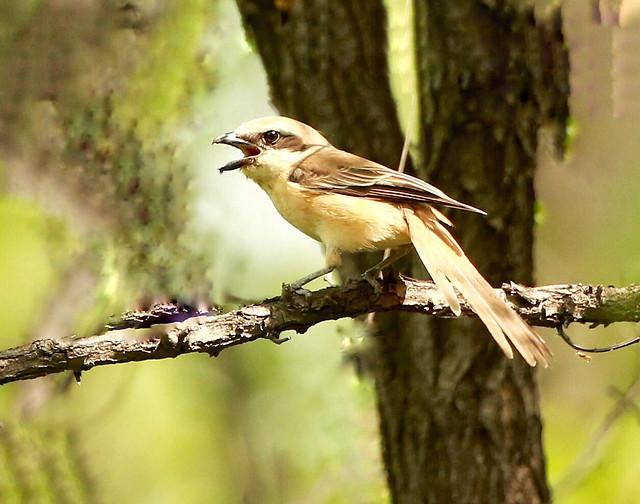 bird-wildlife-no-person-nature-wild picture material