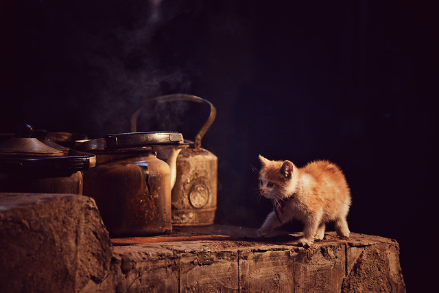 no-person-one-mammal-cat-portrait 图片素材