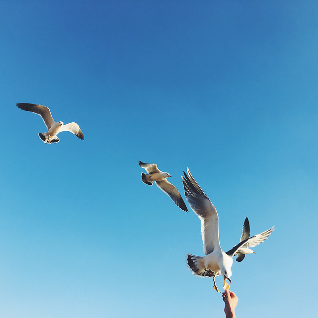bird-seagulls-flight-freedom-sky picture material