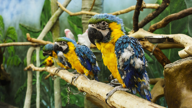 wildlife-bird-nature-animal-zoo picture material