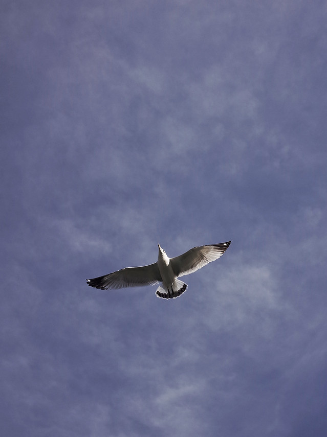 flight-bird-sky-no-person-airplane picture material