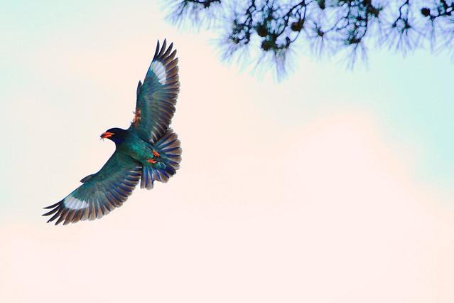 bird-nature-wildlife-flight-no-person picture material