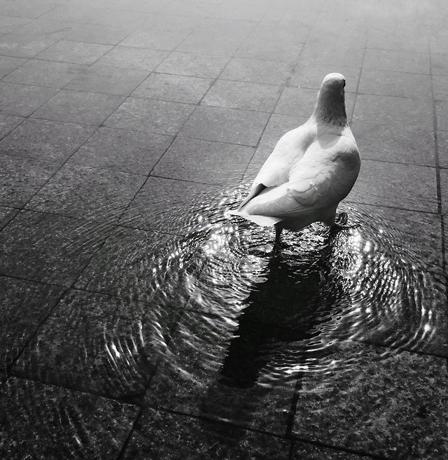 people-water-monochrome-bird-wet 图片素材