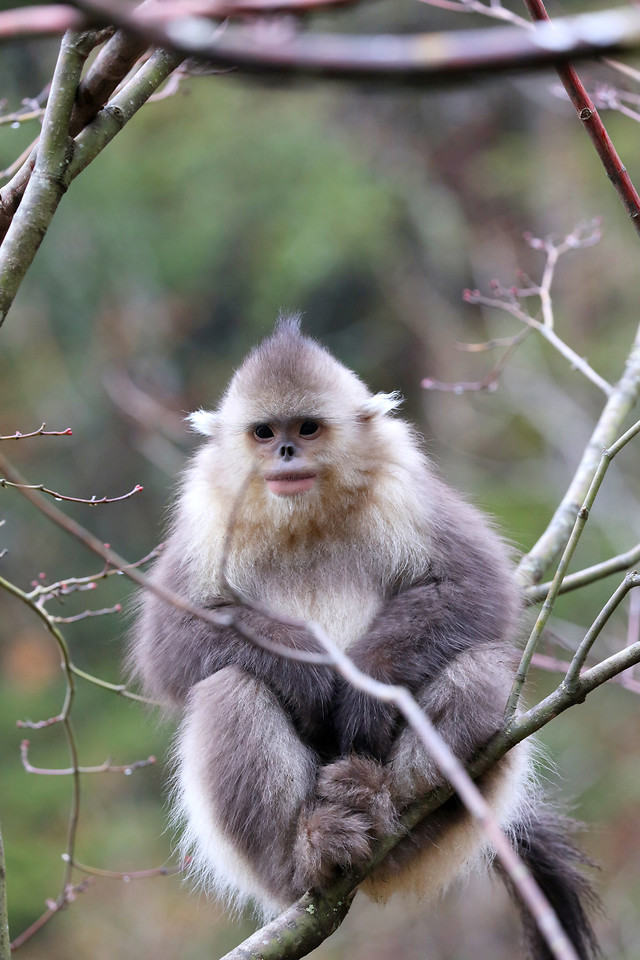monkey-wildlife-nature-cute-tree picture material