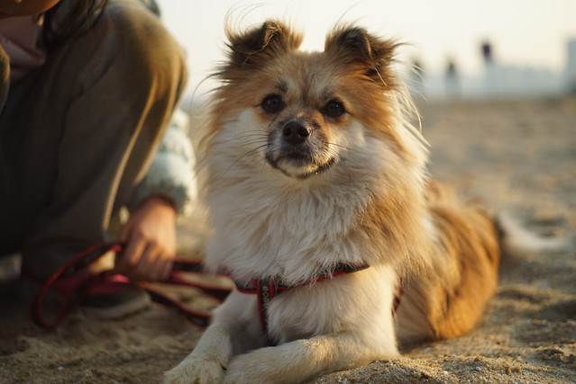 dog-mammal-canine-pet-one picture material