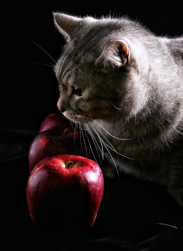cat-portrait-apple-eye-cute 图片素材