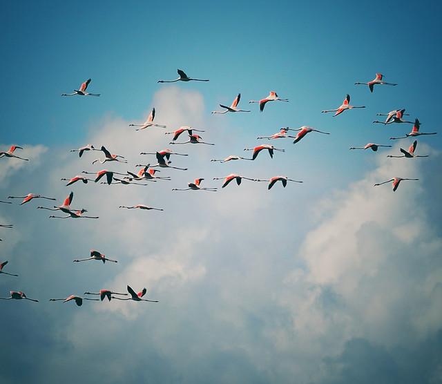 bird-flight-sky-winter-aircraft picture material