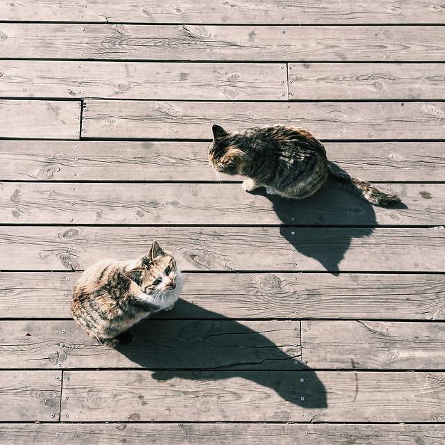 cat-animal-mammal-pet-kitten picture material
