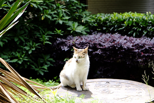 nature-no-person-cat-outdoors-garden picture material