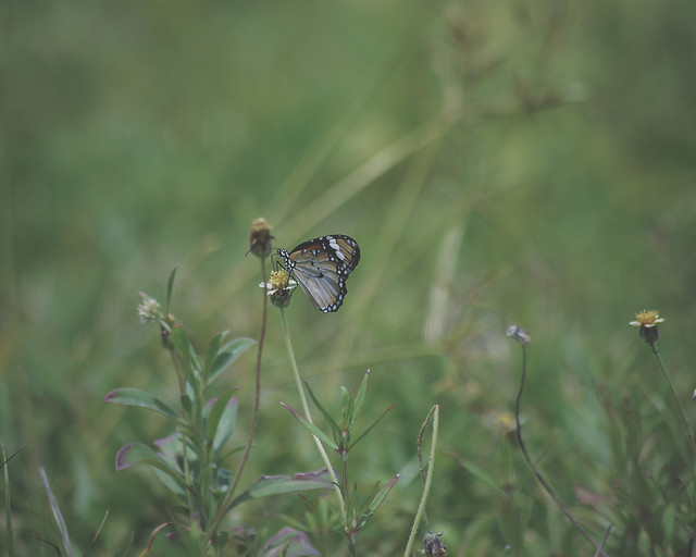 butterfly-insect-nature-wildlife-animal picture material