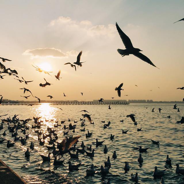 bird-seagulls-water-goose-sunset picture material