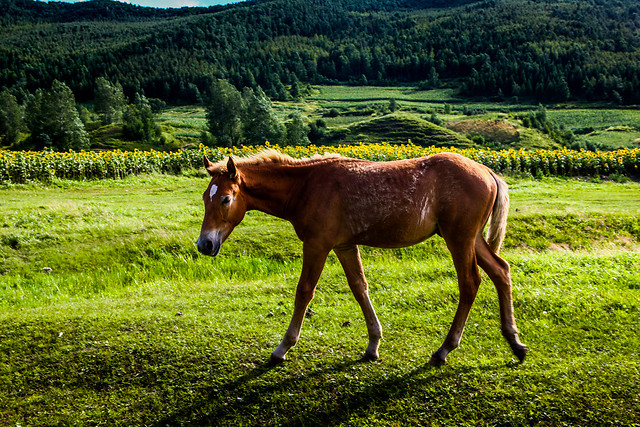 mare-farm-hayfield-pasture-mammal picture material