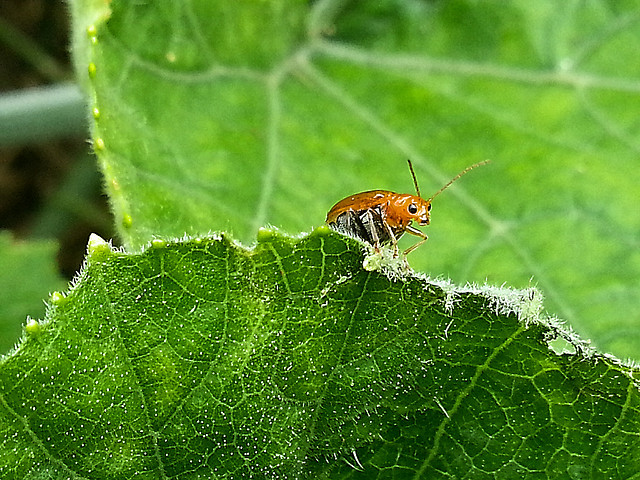leaf-nature-insect-flora-closeup picture material