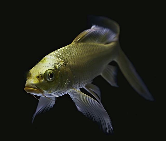 fish-underwater-aquarium-ocean-sea picture material
