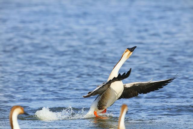 water-bird-no-person-sea-nature picture material