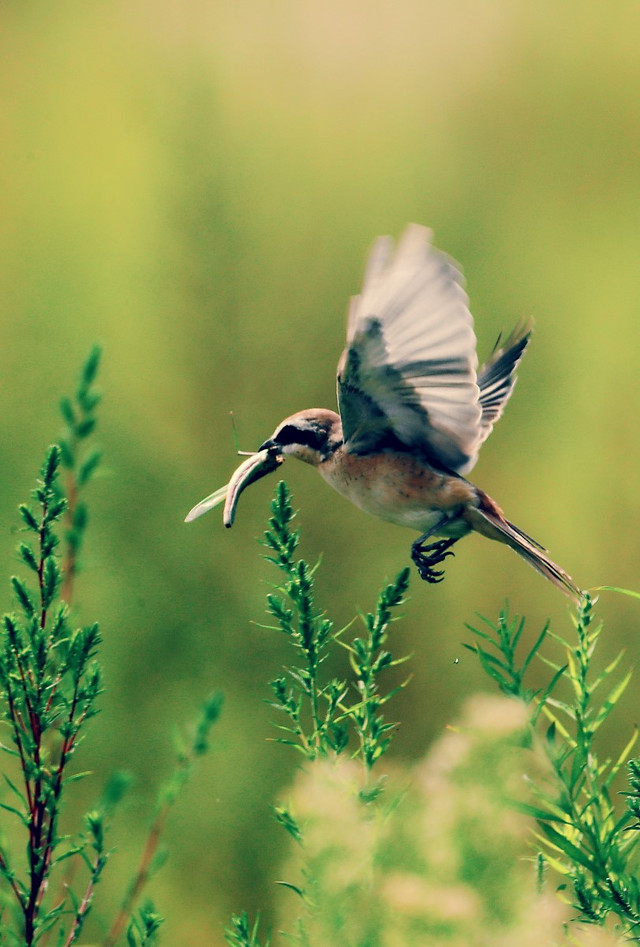 nature-bird-wildlife-no-person-outdoors picture material