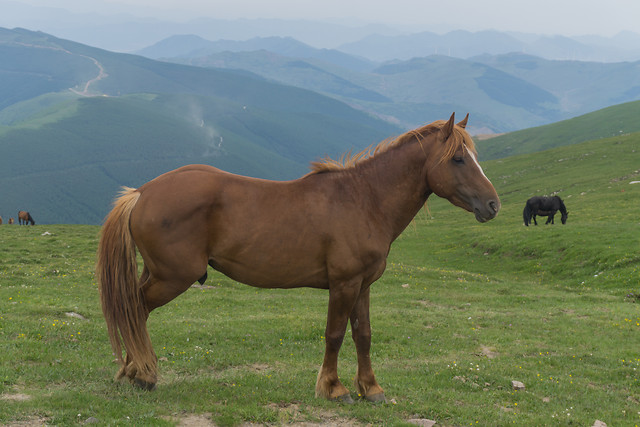 mare-horse-pasture-mammal-cavalry picture material