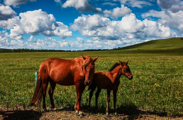 mammal-farm-mare-pasture-grassland picture material