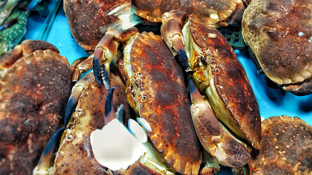seafood-shellfish-crab-fish-crustacean 图片素材