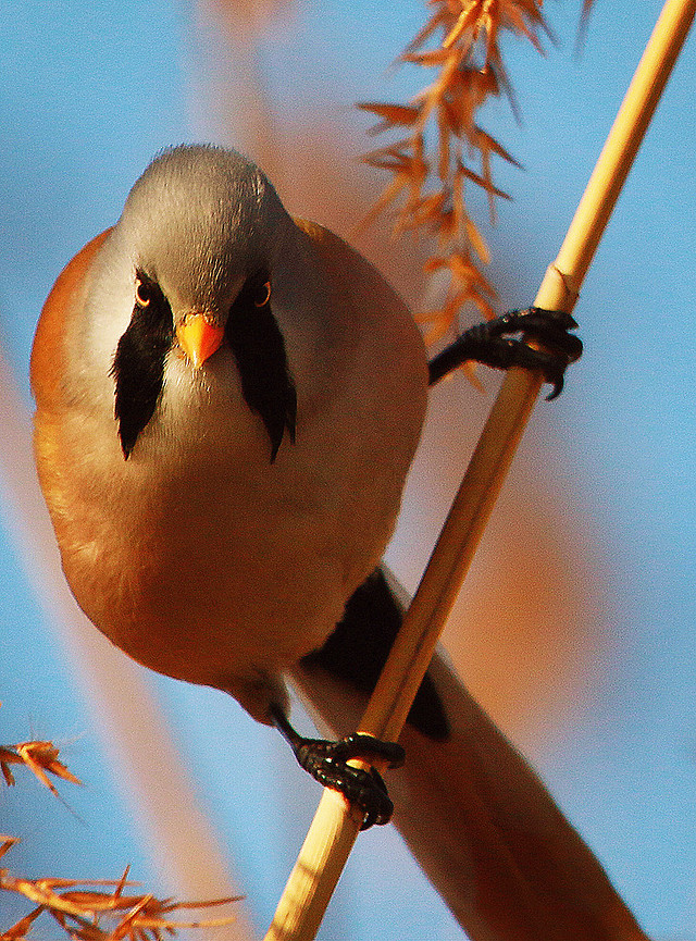 bird-no-person-nature-wildlife-outdoors picture material