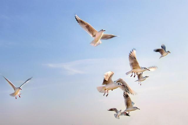 自由飞翔 picture material