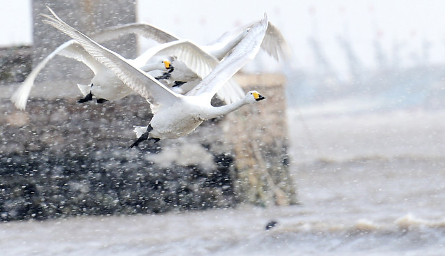 winter-bird-snow-water-nature picture material