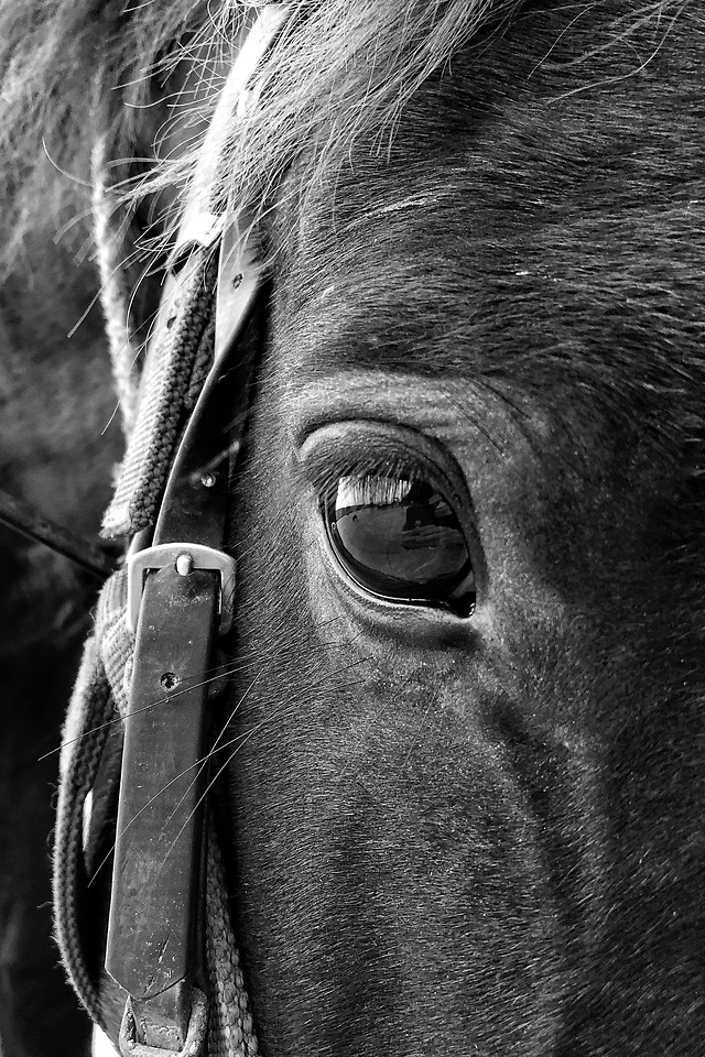 cavalry-portrait-man-people-horse picture material