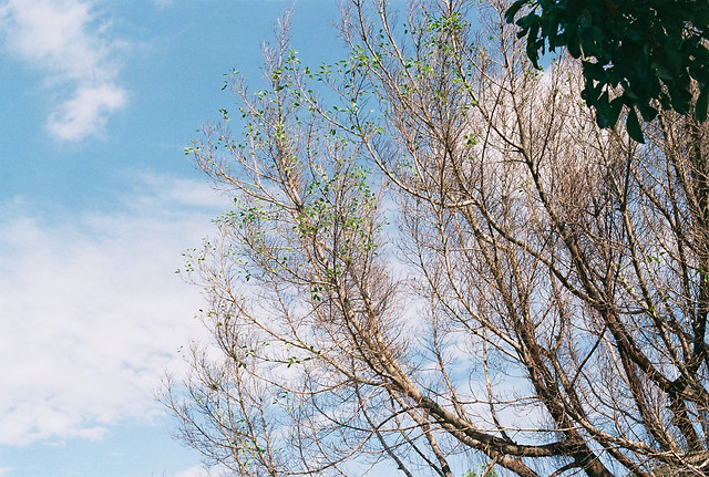 tree-branch-sky-daytime-woody-plant 图片素材