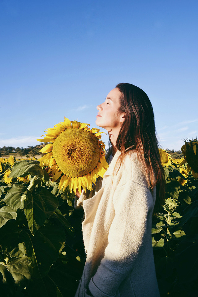 nature-sunflower-outdoors-flower-summer picture material