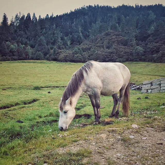 no-person-cavalry-mammal-pasture-mare picture material