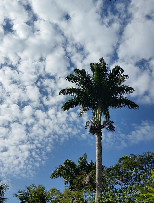 palm-tropical-tree-no-person-sky picture material
