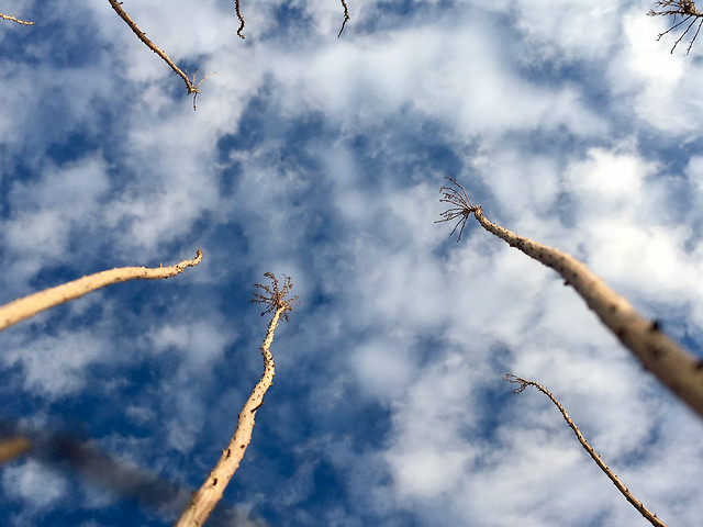 sky-nature-tree-no-person-outdoors picture material