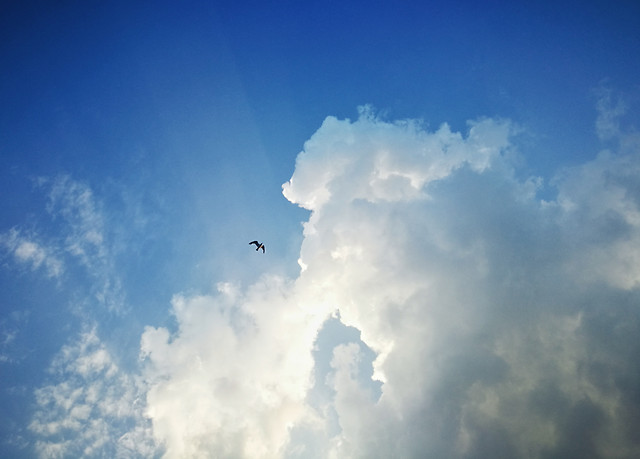 sky-cloud-airplane-landscape-daytime picture material