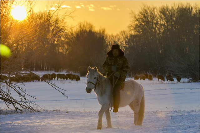 winter-snow-cold-cavalry-mammal picture material