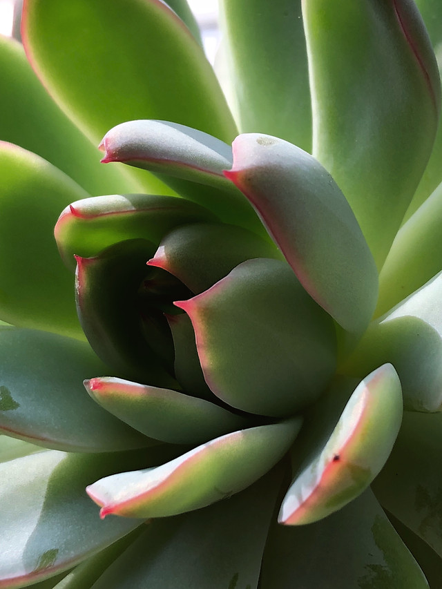 cactus-nature-tropical-exotic-no-person picture material