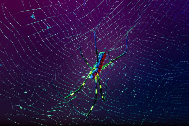 spider-no-person-spiderweb-web-together-web picture material