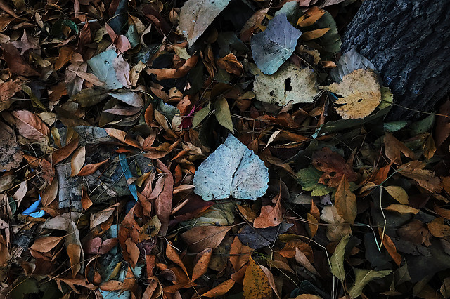 desktop-leaf-texture-fall-garbage picture material