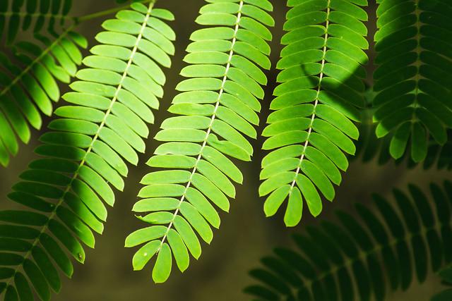 leaf-desktop-closeup-no-person-flora picture material