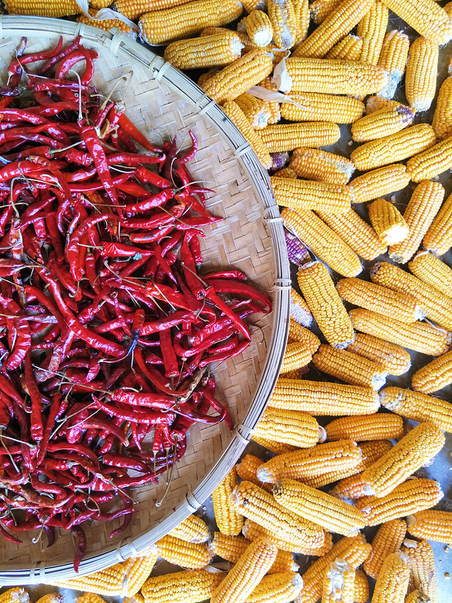 food-corn-vegetable-dry-desktop picture material