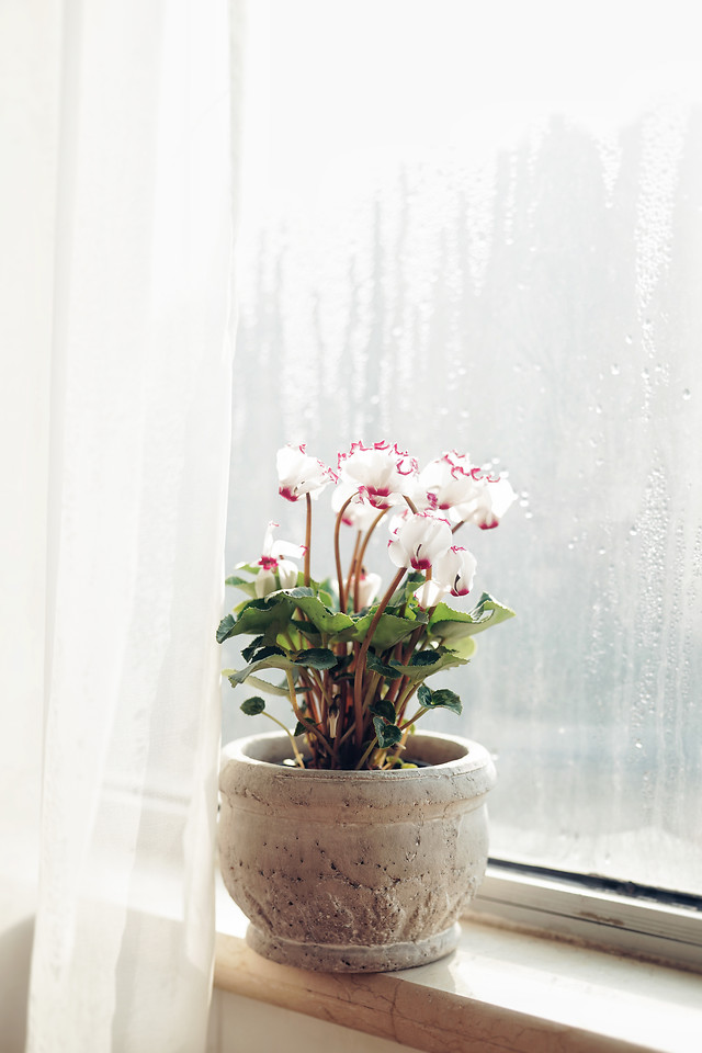 flower-vase-no-person-flora-nature picture material