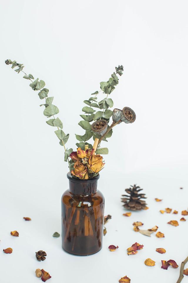 no-person-leaf-nature-flora-desktop picture material
