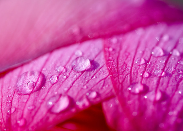 dew-flower-flora-nature-color picture material