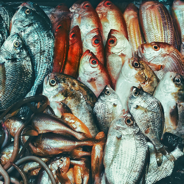fish-seafood-market-sea-marine picture material