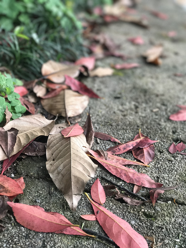 leaf-ground-fall-nature-flora picture material