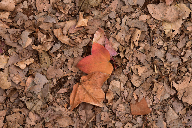 ground-no-person-leaf-nature-dry picture material